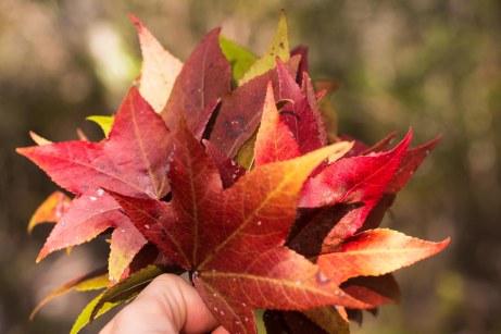 leaf crown tutorial (1 of 8)